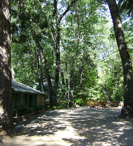 Ample Tree-Shaded Grounds at Cedar Lodge Motel